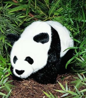 Panda, stehend
