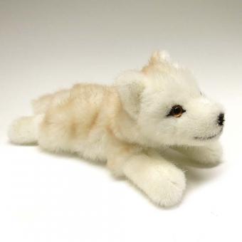 Polarwolf-Welpe, liegend