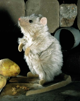 """Rat """"Rosine"""""""