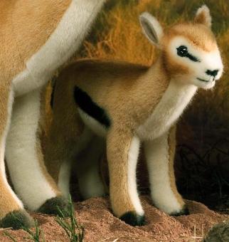 Thomson Gazelle, Kind