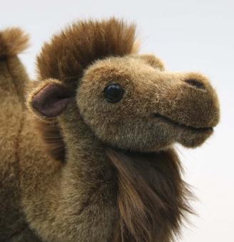 "Bactrian Camel ""Gobi"""