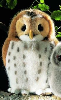 "Tawny Owl ""Julius"""