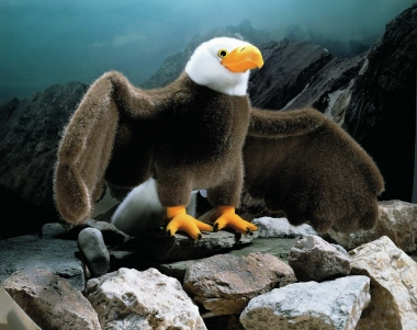 "Bald Eagle ""George"""
