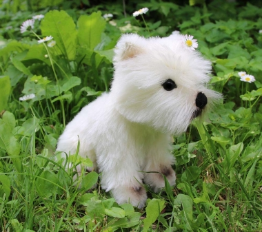 "Westhighland Terrier ""Enno"""