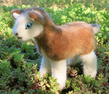 "Goat kid ""Meck"""