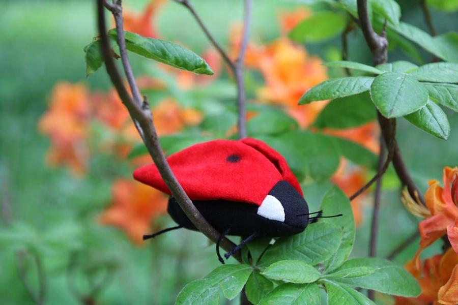 "Ladybird ""Two-Dot"""