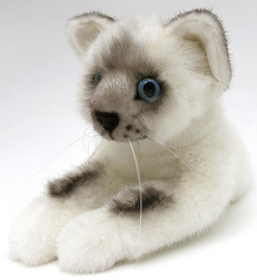 Little Birmacat, lying