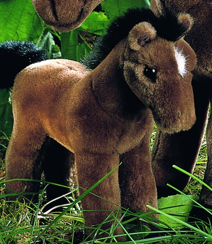 Brown Foal