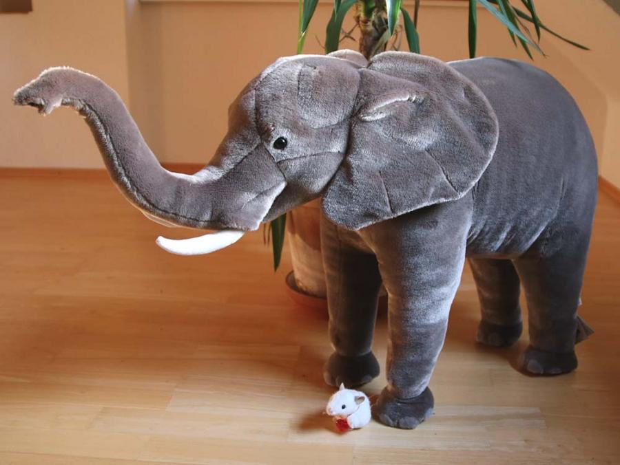 """Elephant """"Njogu"""", standing"""