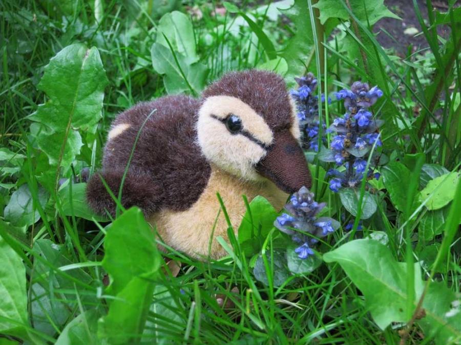Duckling, brown