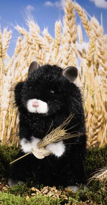 Common Hamster, black