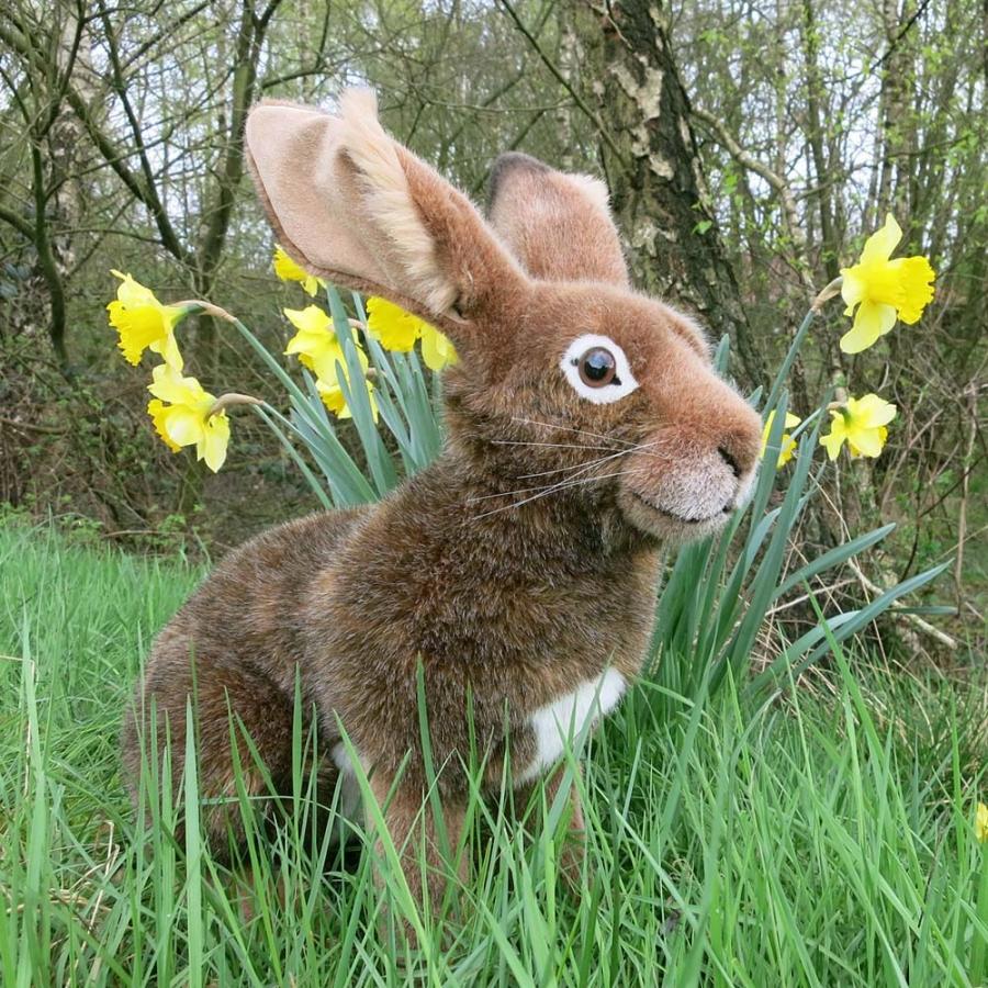 """Hare """"Mümmel"""""""