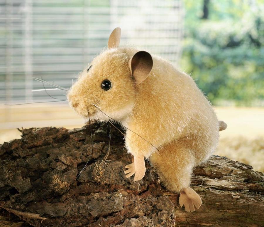 Hamster, sitting