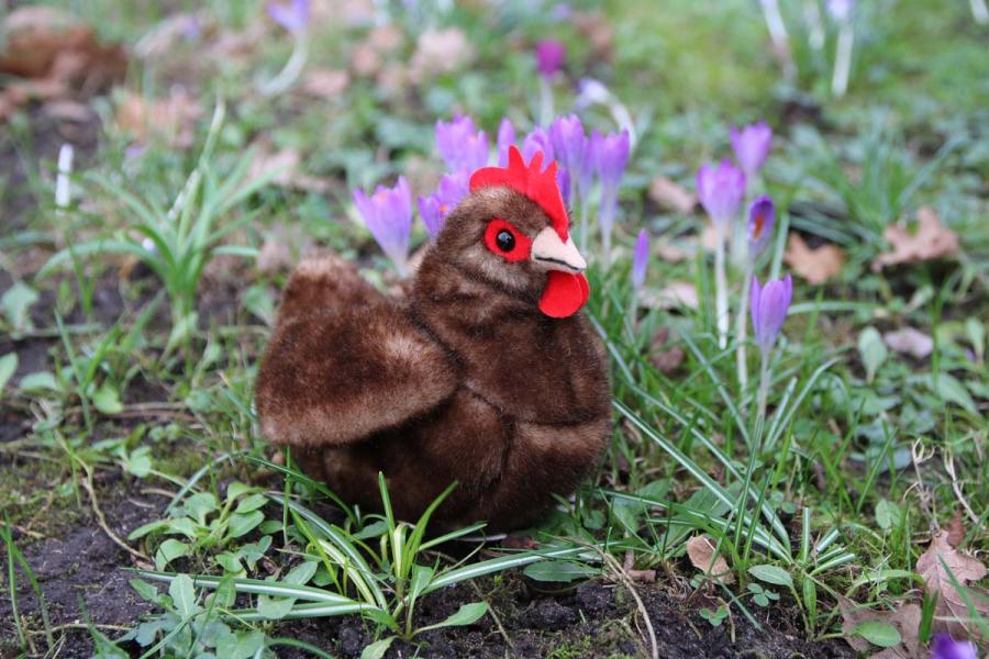 Kleines Huhn, braun