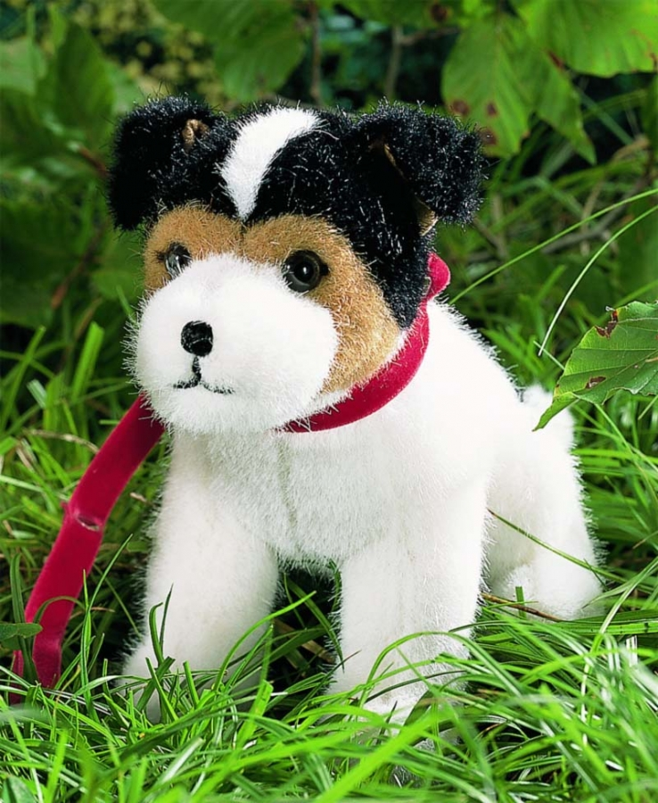 "Jack Russel Terrier ""Jacky"", sitting"