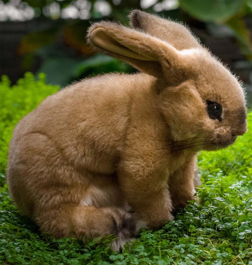 """Kaninchen """"Sahara"""""""
