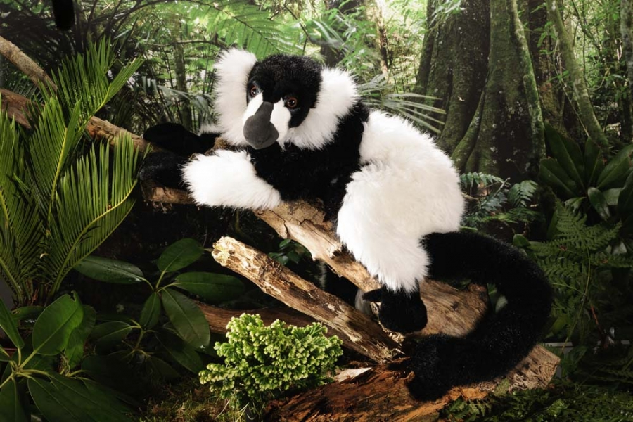 Lemur Black-White