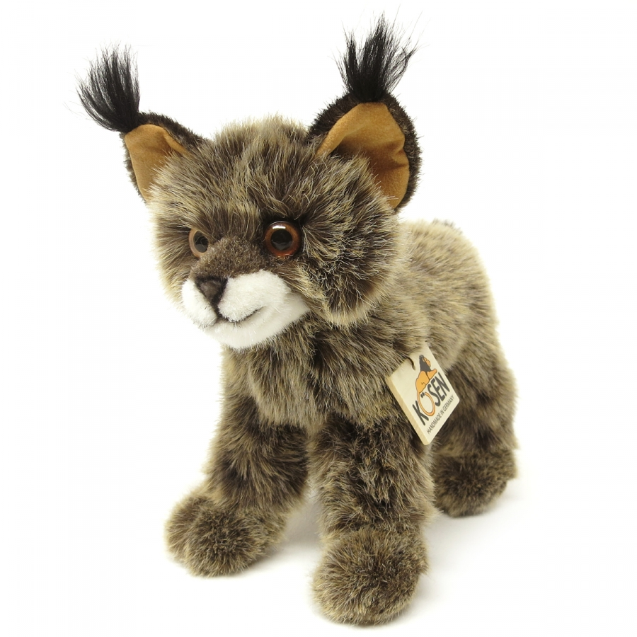 Lynx, kitten