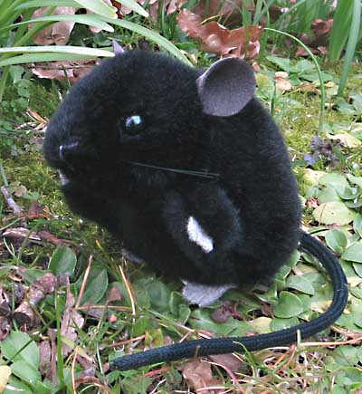 Mouse, black