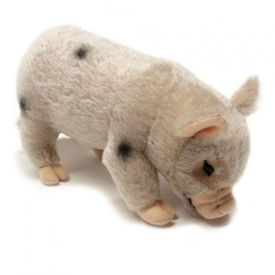 Micro-Pig, weiß
