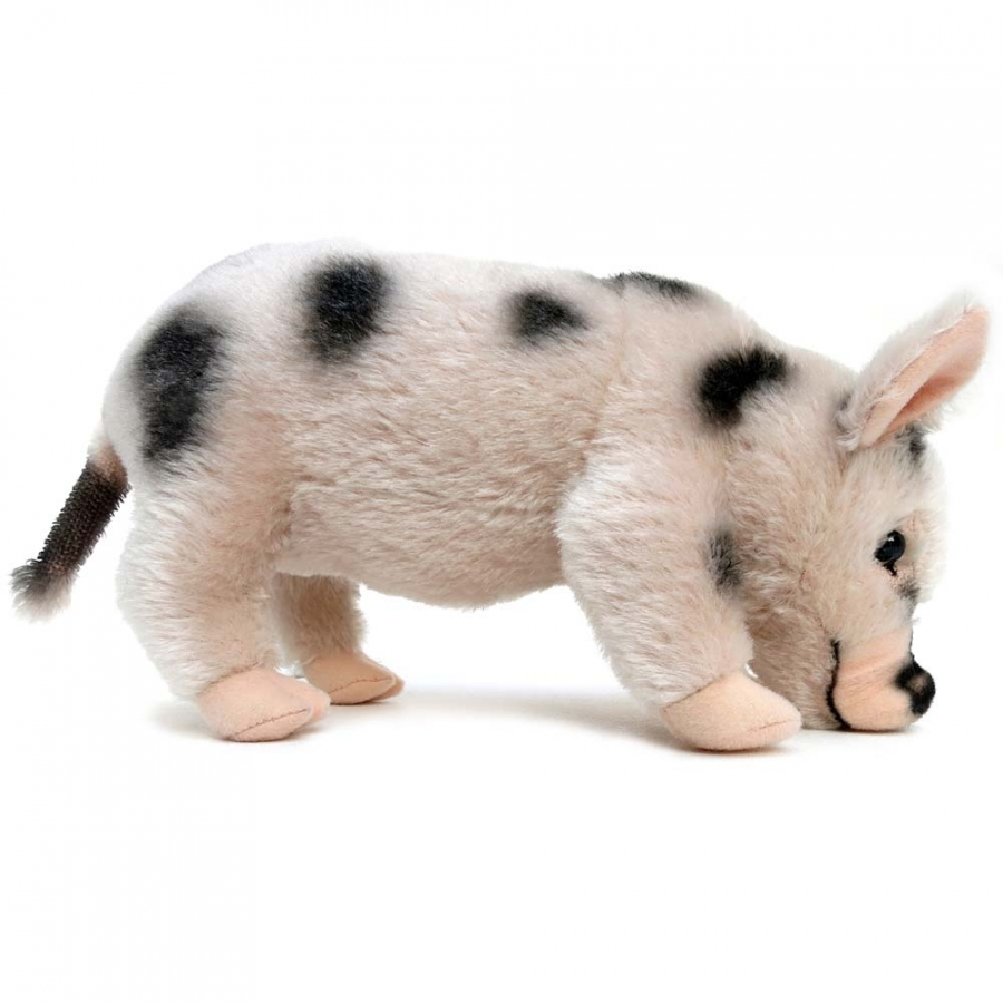 Micro Pig, with black spots