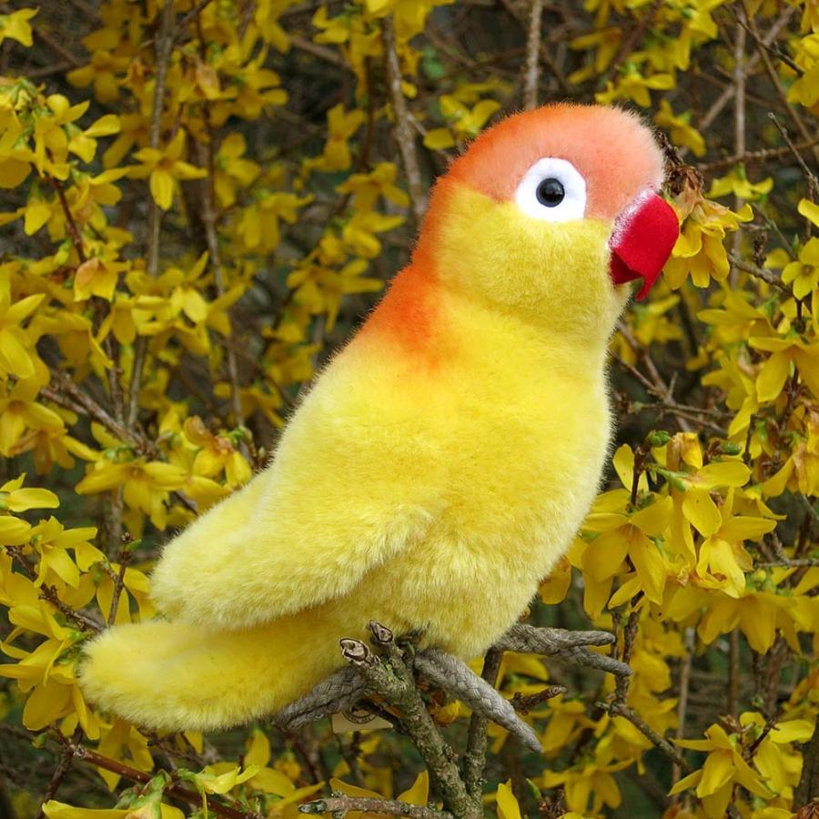 Lovebird, yellow