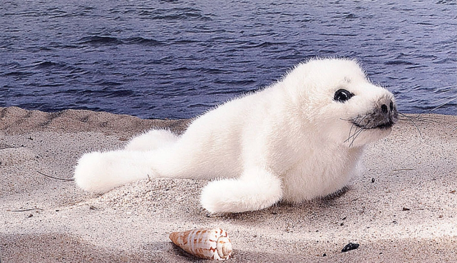 Ringed Seal, Baby