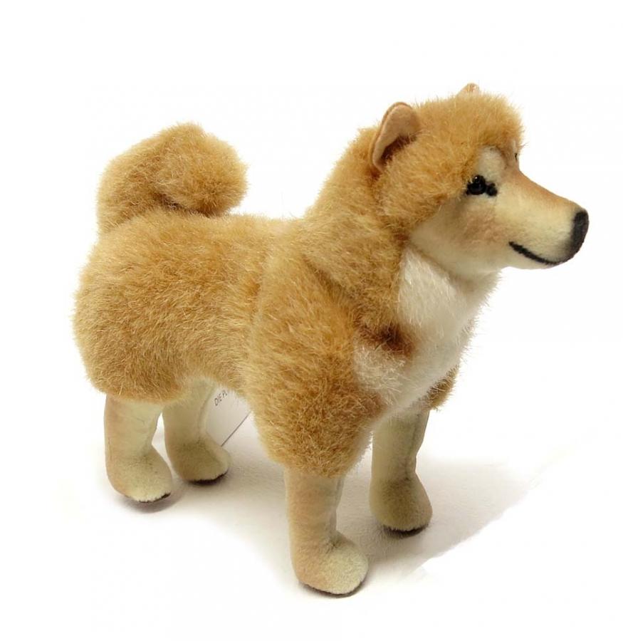 Shiba-Inu, Miniature