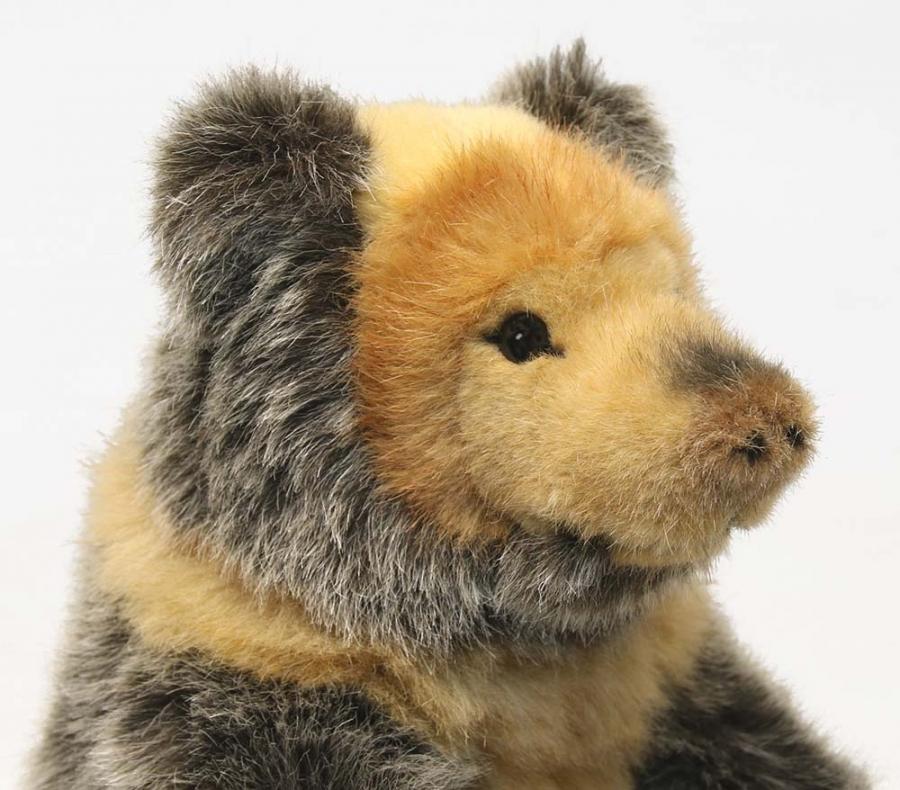 Tibetischer Bär