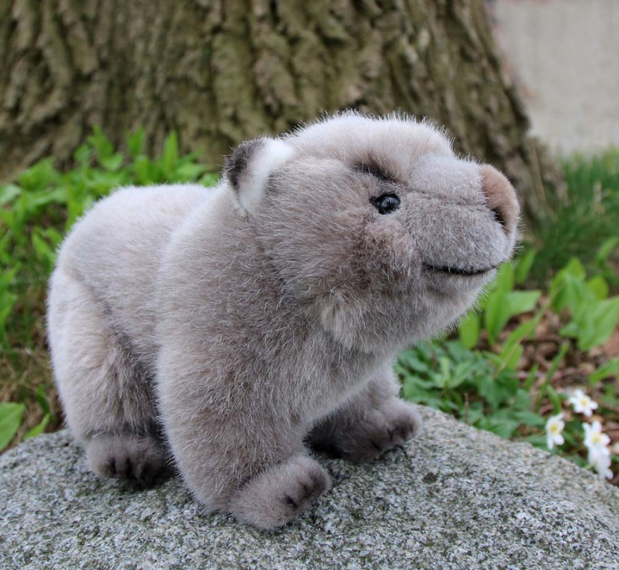 Wombat, young