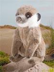 Erdmännchen-Baby