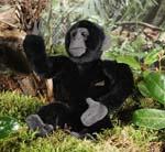 Gorilla, klein