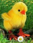 "Chick ""Piep"""
