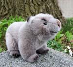 Wombat, Kind
