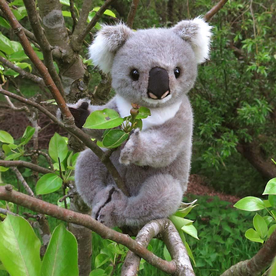 Parts of a koala related keywords suggestions parts of - Koala components ...