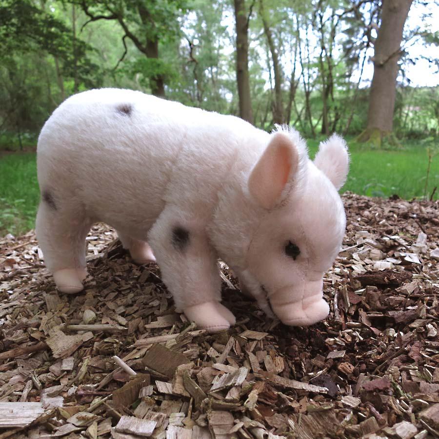 Micro schweine